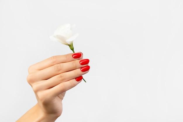 Main de femme avec une fleur sur fond gris