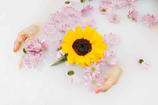 Main de femme avec des fleurs jaunes et roses dans l'eau blanche claire