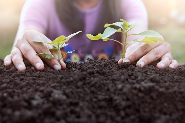 Main de femme planter un jeune arbre sur un sol noir comme sauver le concept du monde