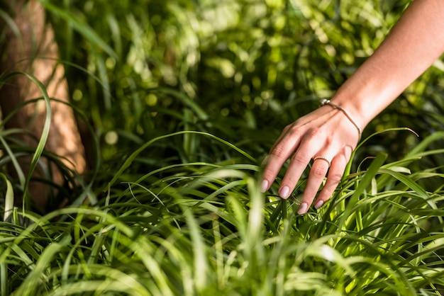 Main de femme près de feuilles vertes