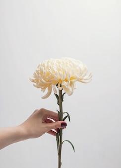 Main de femme tenant de belles fleurs sur le fond du mur blanc