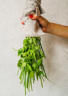 Main de femme tenant un bouquet de persil sur fond