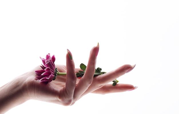 Main de femme tenant une fleur isolée