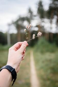 Main de femme tenant de l'herbe sur fond de route