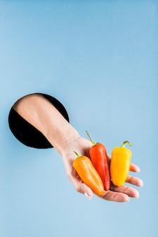 Main de femme tenant des mini poivrons colorés hors d'un trou noir dans un mur de papier bleu.