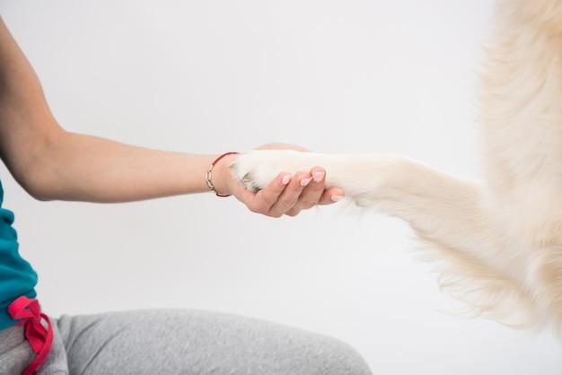Main de femme tenant la patte du chiot