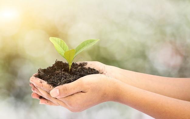 Main de femme tenant une petite plante d'arbre vert