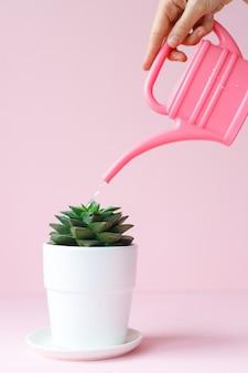 La main d'une femme tient un arrosoir rose et arrose une plante d'intérieur dans un pot lumineux sur fond rose