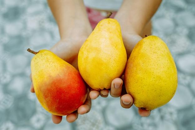 La main d'une femme tient des poires mûres jaunes fraîchement cueillies.
