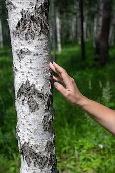 Main de femme touche le bouleau en forêt