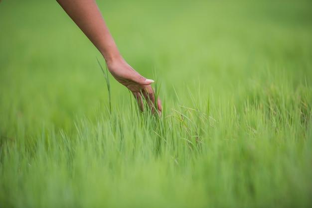 La main de la femme touche l'herbe verte
