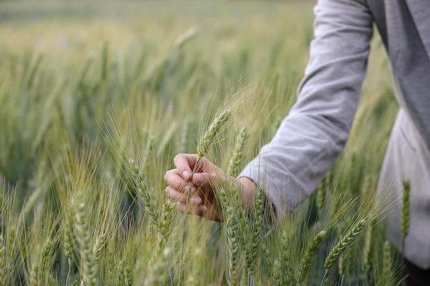 Main de femme toucher le champ vert d'orge. moment authentique atmosphérique. fille élégante, profitant d'une soirée paisible dans la campagne. copiez l'espace. vie lente rurale