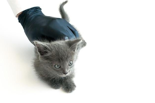 Main avec gant tenant un chaton. concept de soins de santé et vétérinaire