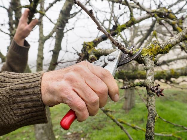 Main d'un homme élagage un jeune arbre avec un sécateur, dans un champ à l'automne un jour brumeux
