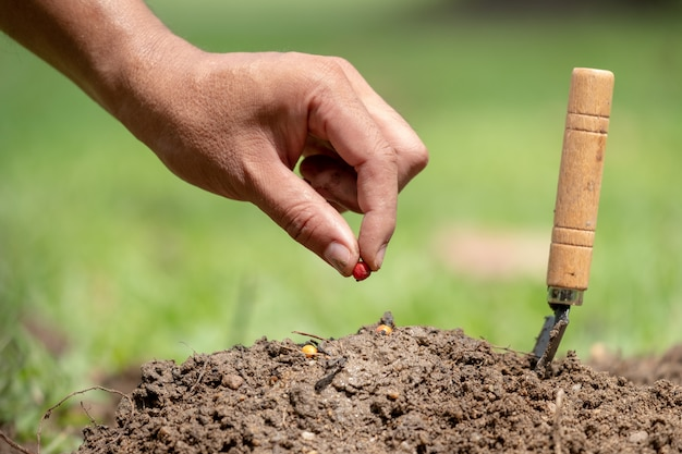 Main de l'homme planter une graine dans le sol et sauver le concept