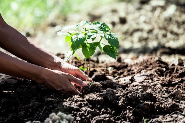 Main de l'homme planter un jeune arbre sur un sol noir comme sauver le concept du monde