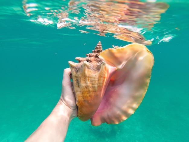 Main d'un homme de plongée en apnée tenant un énorme concept sous-marin de conque de vocation de voyage et d'aventure