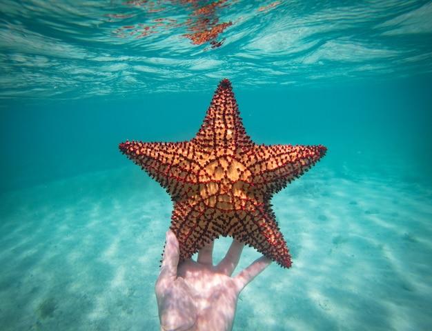Main d'un homme de plongée en apnée tenant une étoile de mer dans le concept d'eau bleu clair de vocation de vacances et de détente