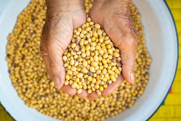 Main de l'homme ramasser le soja sec. haricot dans le concept de nourriture vue palm.top