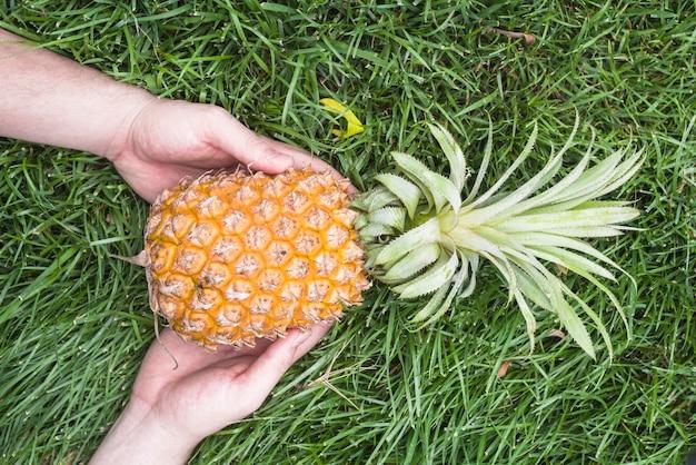 Main de l'homme tenant des ananas sur l'herbe verte