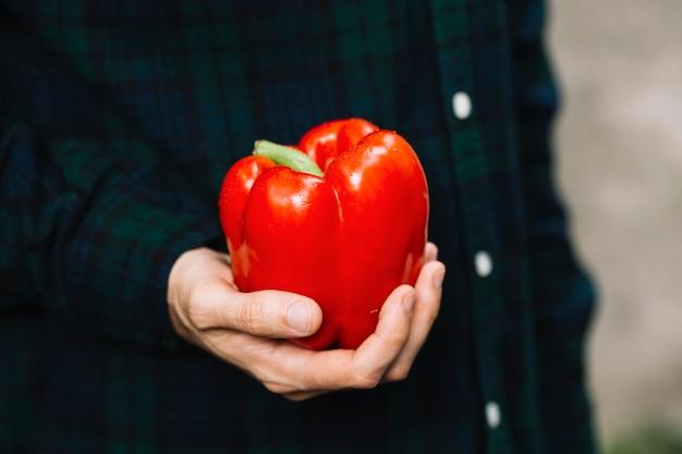 Main humaine tenant un poivron rouge