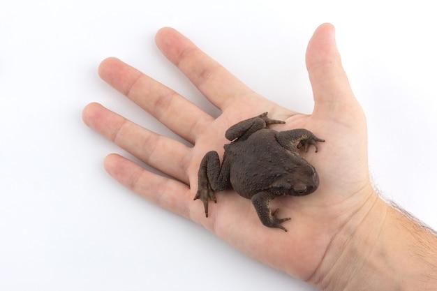 Une main humaine tient un crapaud en terre sur fond blanc
