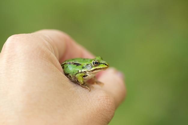 La main humaine tient une grenouille verte, mise au point sélective, arrière-plan flou vert.