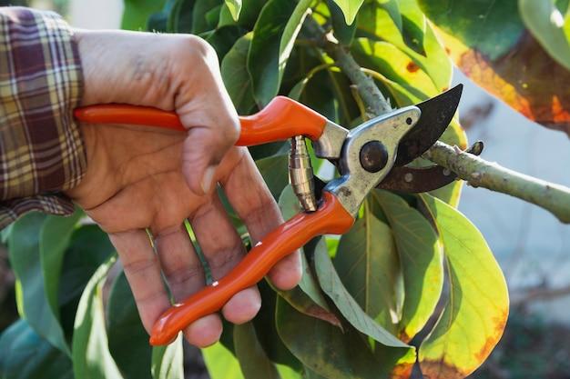 Main de jardinier élagage des arbres avec des sécateurs.