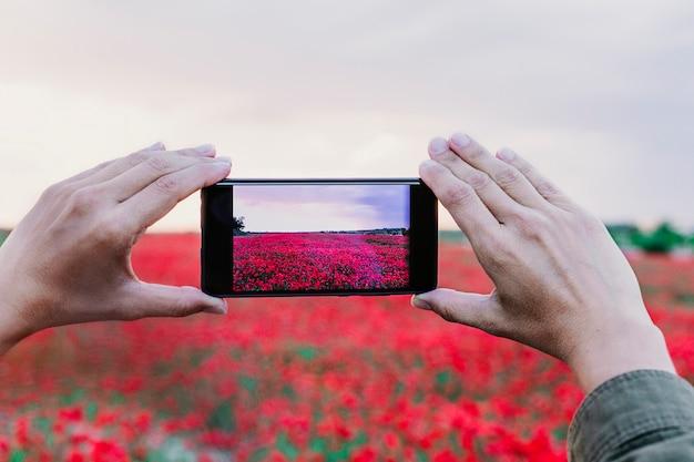 Main d'une jeune femme prenant une photo d'un champ avec des fleurs de pavot