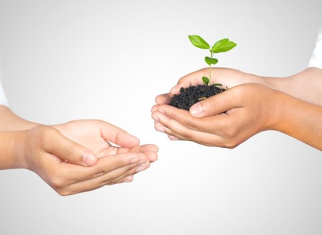 Main mains de femme tenant et prenant une jeune plante isolée sur blanc. concept écologique
