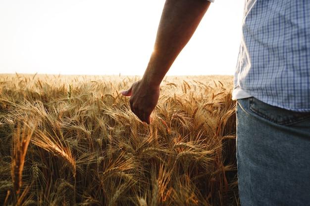 La main masculine touche les épis de blé sur le terrain au coucher du soleil