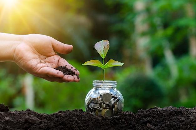 Main mettre de l'argent bouteille billets de banque arbre image de billet de banque