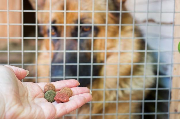 Main avec de la nourriture pour chien et un berger allemand dans une cage