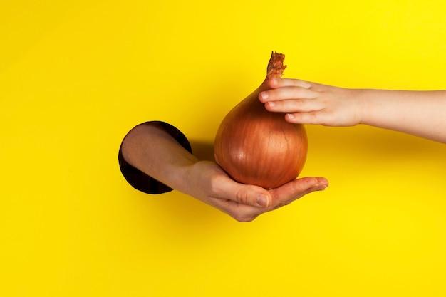 La main offre des oignons à travers le trou. la main d'un enfant essaie de prendre un énorme légume racine.