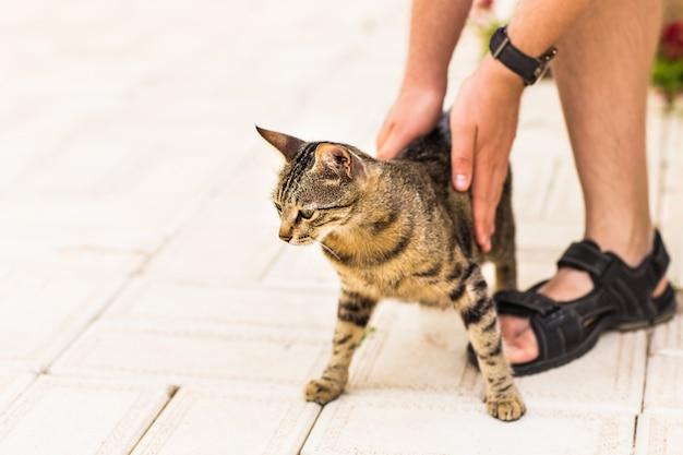 Main de personne caressant le chat.