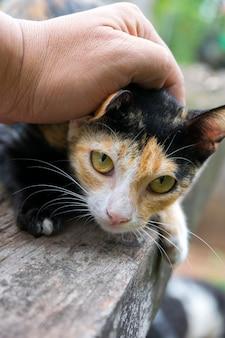 Main de la personne caressant la tête du chat