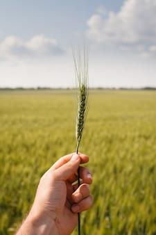 Main de la personne tenant une usine de céréales, mise au point sélective