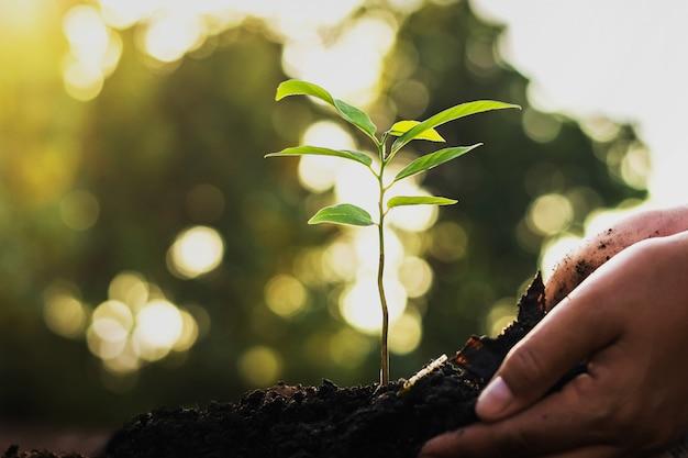 Main plantant un arbre dans le jardin. monde vert concept