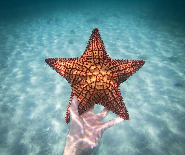 Main de plongeur tenant un concept sous-marin d'étoile de mer de voyage et d'aventures