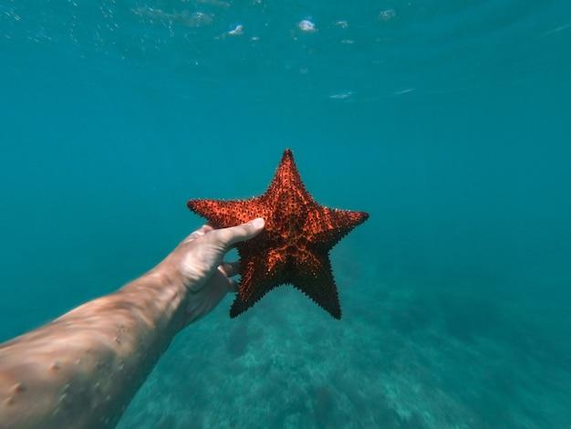 Main de snorkeler détient des étoiles de mer sous l'eau avec des bulles au premier plan