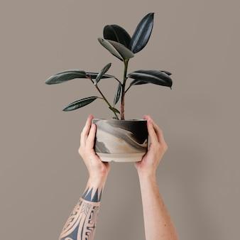 Main tatouée tenant une usine de caoutchouc en pot