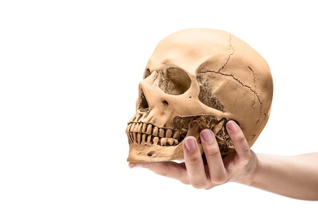 Main tenant un crâne humain