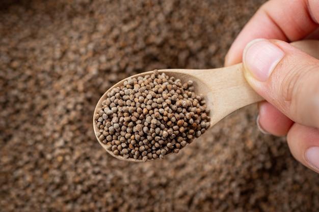 Main tenant une cuillère en bois avec des graines de perilla sur un arrière-plan flou de graines de perilla.