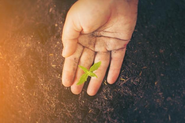 Main tenant doucement le sol riche pour ses plantes de marijuana
