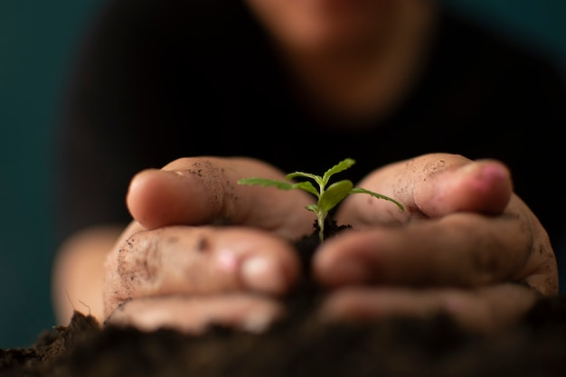 Main tenant doucement la terre riche pour ses plantes de marijuana