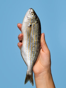 Main tenant du poisson frais avec gros plan