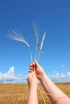 Main tenant les épis de blé contre le ciel bleu