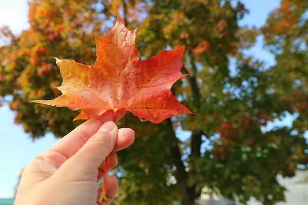 Main tenant une feuille d'érable rouge avec flou de feuilles d'arbres colorés et ciel bleu