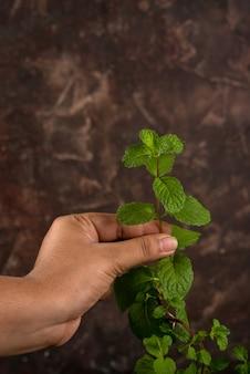 Main tenant des feuilles de menthe fraîche isolés sur fond texturé en pierre