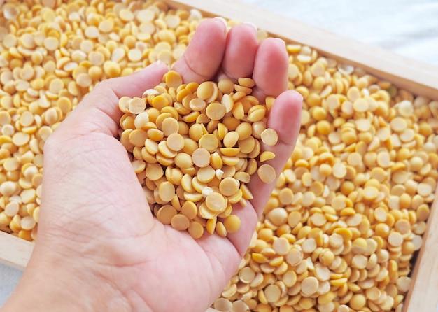 Main tenant des graines de soja séchées dans un plateau en bois